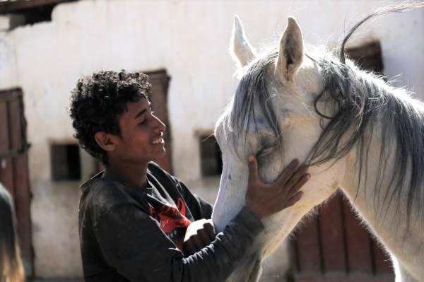 Battle to save Yemen's kings of the desert: Sanaa's Arabian horses abandoned by war   Middle East Eye