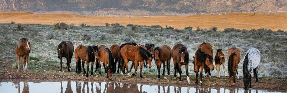 American Mustangs Cover Image