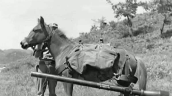 Heroic Korean War horse honored by Marines with bronze statue   Fox News