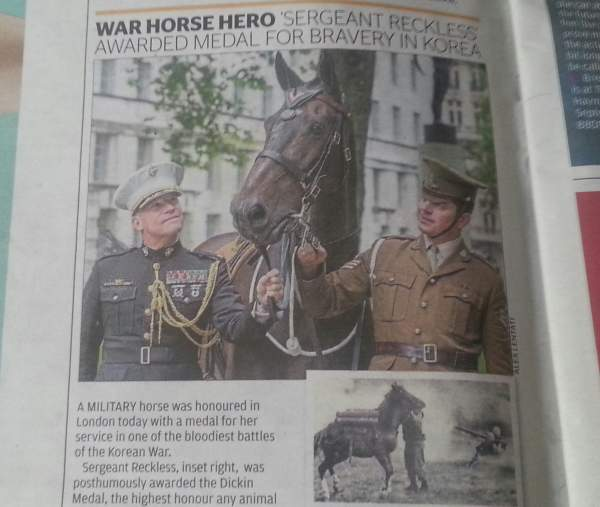 The Korean Horse That Gets Everywhere: Sgt. Reckless Awarded UK's Dickin Medal   Horse Racing in Korea