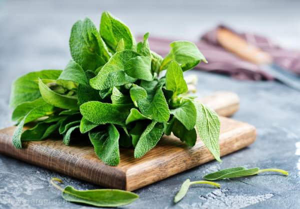Improving oral and brain health: Antioxidant-rich sage has amazing health benefits – NaturalNews.com