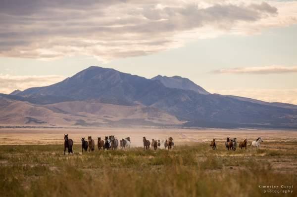 Tell Congress: Halt Removal of Onaqui Wild Horses!
