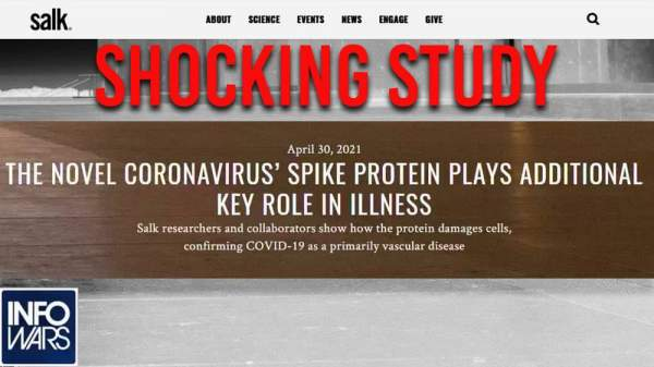 SHOCK STUDY- Spike Protein Key Factor In Vaccine Deaths