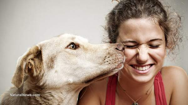 Dogs proven to engage in moral evaluation of people and animals by observing their behavior - NaturalNews.com