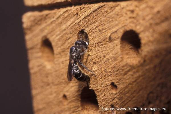 Insect Hotels: A  Refuge or a Fad?   The Entomologist Lounge