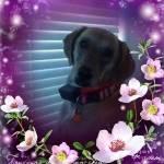 Lisa Ham Profile Picture
