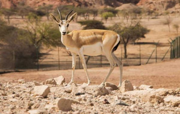 Sir Bani Yas: All about the island in the UAE