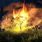Hedge of Fire Devotional Profile Picture