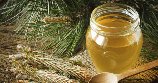 Pine Needle Syrup For Lung Inflammation and Bronchitis