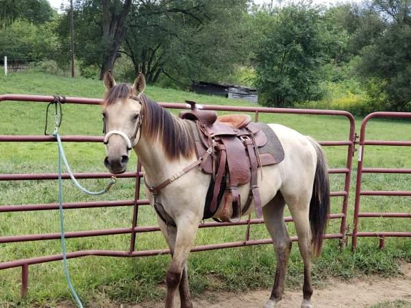 Line back dun Gelding For Sale - CowboyWay Classifieds