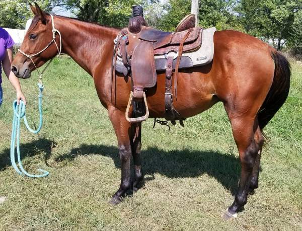 Electra Lena Gelding For Sale - CowboyWay Classifieds