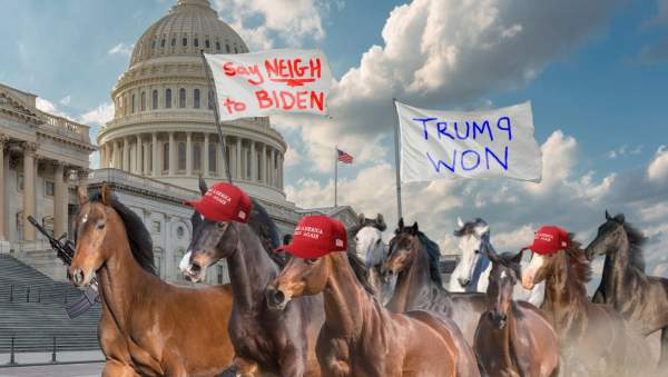 After Being Fired By Biden, Radicalized Horses Storm Capitol Shouting 'Trump Won!'   The Babylon Bee