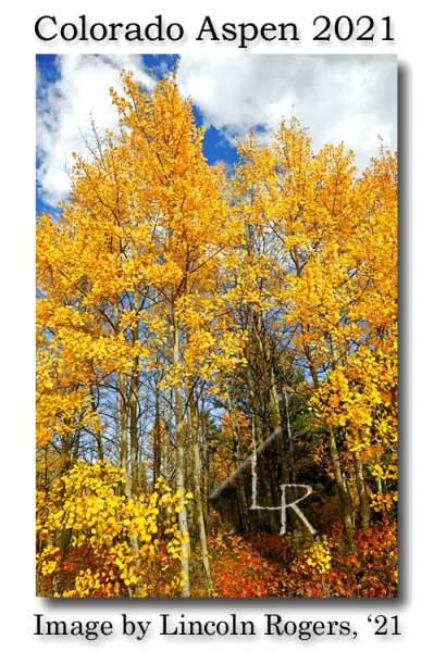Rocky Mountain Scenery Variety   Lincoln's Thinkin's