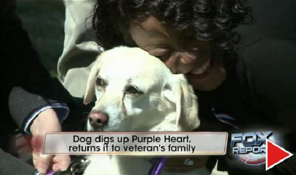 Dog Digs Up Purple Heart Medal In Backyard... What Happens Next Is AMAZING!